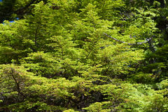 зеленый цвет листва свежий Стоковое фото RF
