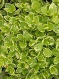 зеленый цвет листва Стоковое фото RF