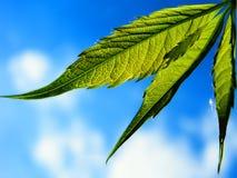 зеленый цвет листва Стоковые Изображения RF