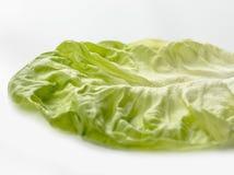 Зеленый цвет лист салата изолированный на белизне Стоковые Изображения RF