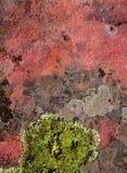 Зеленый цвет лишайника на красной природе текстуры утеса Стоковая Фотография RF