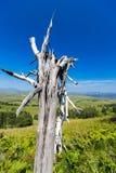 Зеленый цвет лужка вала Стоковое Фото
