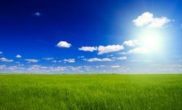 зеленый цвет льна поля стоковые изображения