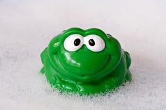 зеленый цвет лягушки смешной Стоковые Изображения RF