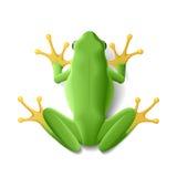 зеленый цвет лягушки иллюстрация штока