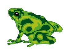 зеленый цвет лягушки Бесплатная Иллюстрация