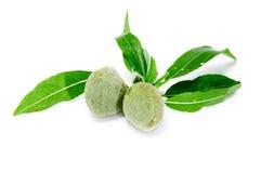 зеленый цвет миндалин Стоковое Фото
