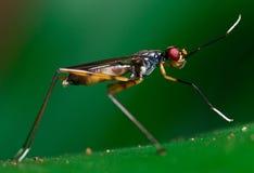 зеленый цвет мухы Стоковые Изображения RF