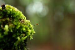 Зеленый цвет мха в природе на дереве стоковое фото rf