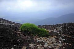 Зеленый цвет мха, малое дерево в природе на скалистой земле стоковые изображения rf