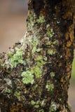 Зеленый цвет мха на деревьях в природе с влагой стоковая фотография