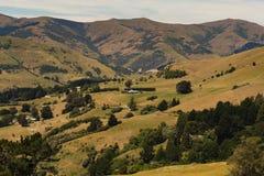 Зеленый цвет обрабатываемой земли, который хранят с предпосылкой горы Стоковое фото RF