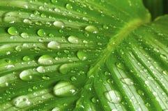зеленый цвет падений выходит утро Стоковое Изображение RF