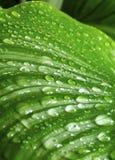 зеленый цвет падений выходит утро Стоковая Фотография RF