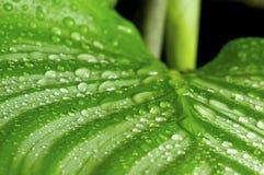 зеленый цвет падений выходит утро Стоковые Изображения RF