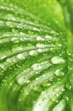 зеленый цвет падений выходит утро Стоковое фото RF