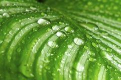 зеленый цвет падений выходит утро Стоковое Изображение