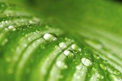 зеленый цвет падений выходит утро Стоковое Фото