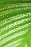 зеленый цвет падений выходит утро Стоковые Изображения