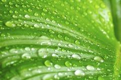 зеленый цвет падений выходит утро Стоковые Фото