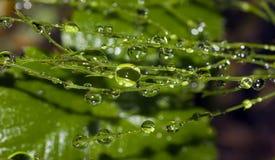 зеленый цвет падений Стоковые Фото