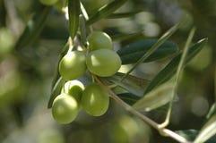 зеленый цвет падений Стоковое фото RF