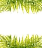 зеленый цвет папоротника граници Стоковое Изображение RF