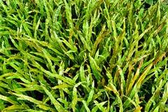 зеленый цвет папоротника предпосылки Стоковые Фото