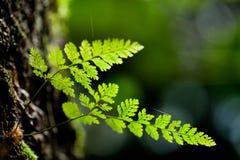 зеленый цвет папоротника предпосылки Стоковая Фотография