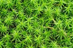 зеленый цвет папоротника предпосылки Стоковое фото RF
