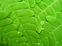 зеленый цвет папоротника Стоковые Изображения RF