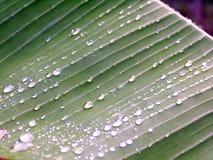 зеленый цвет падений росы Стоковые Изображения