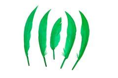 зеленый цвет пера птицы Стоковые Изображения