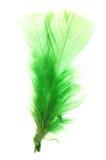 зеленый цвет пера стоковая фотография
