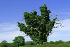 зеленый цвет перстов Стоковые Фотографии RF