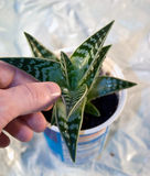 зеленый цвет перстов Стоковое фото RF