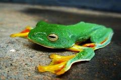 зеленый цвет пола Стоковое Изображение RF