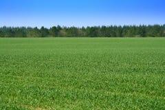 зеленый цвет полей Стоковое Изображение RF