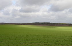 зеленый цвет полей Стоковые Фото