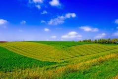 зеленый цвет полей Стоковая Фотография RF