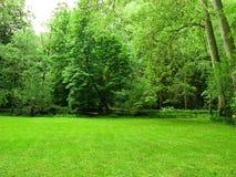 зеленый цвет полей Стоковое Фото
