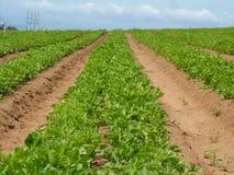 зеленый цвет полей Стоковые Изображения