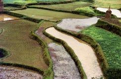 зеленый цвет полей Стоковая Фотография