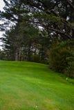 Зеленый цвет поля для гольфа Стоковое Фото