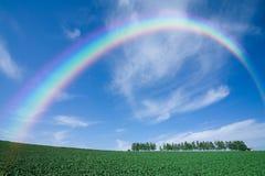 зеленый цвет поля над радугой Стоковые Фотографии RF
