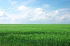 зеленый цвет поля сельской местности Стоковые Фото
