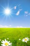 зеленый цвет поля стоцвета Стоковое Изображение RF
