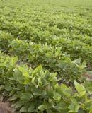 зеленый цвет поля Стоковая Фотография RF