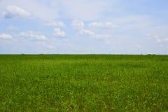 зеленый цвет поля Стоковое Изображение