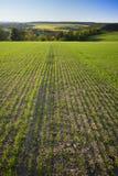 зеленый цвет поля стоковые фото